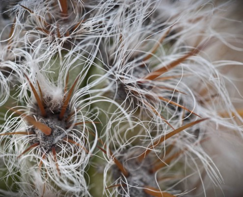 gran-canaria-makros-kaktus-3