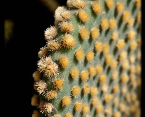 Kaktus Fotografie Gran Canaria