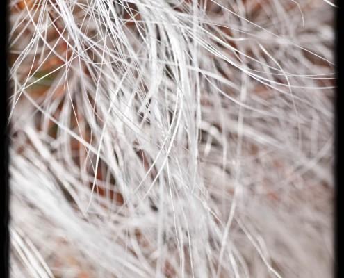 gran-canaria-makros-kaktus-22