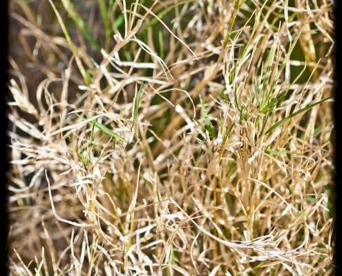 gran-canaria-makros-kaktus-25