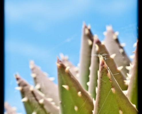 gran-canaria-makros-kaktus-29