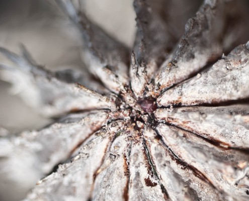Kaktus Makrofotgrafie in Gran Canaria