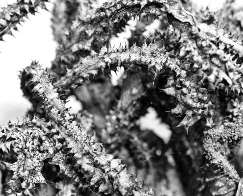 gran-canaria-makros-kaktus-7