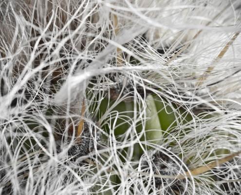 gran-canaria-makros-kaktus-8