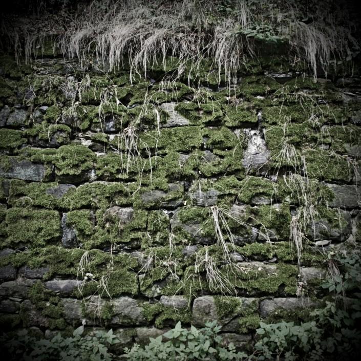 Moos Textur Wand